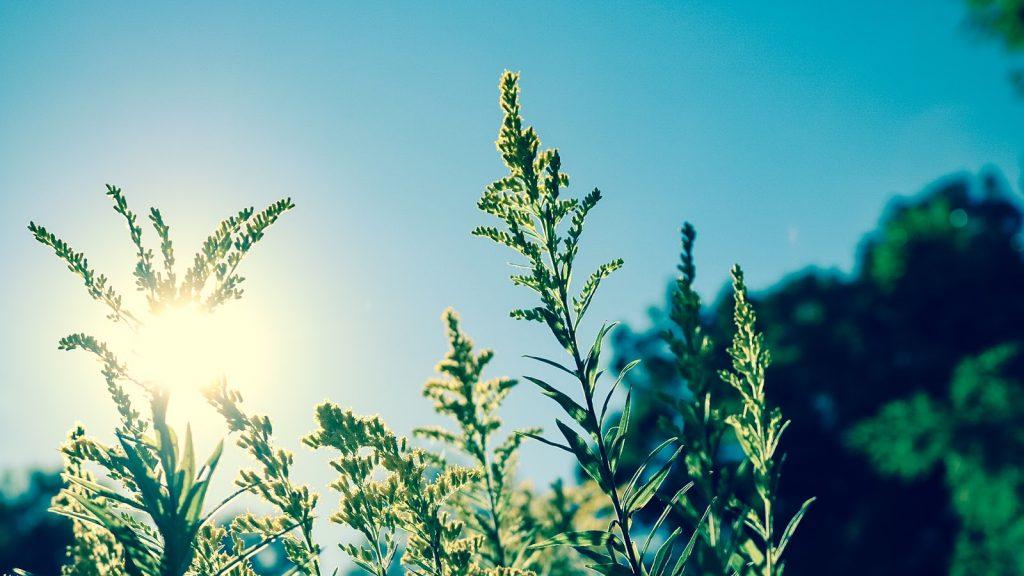 eczema and sun