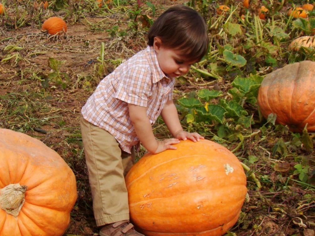 pumpkin allergy