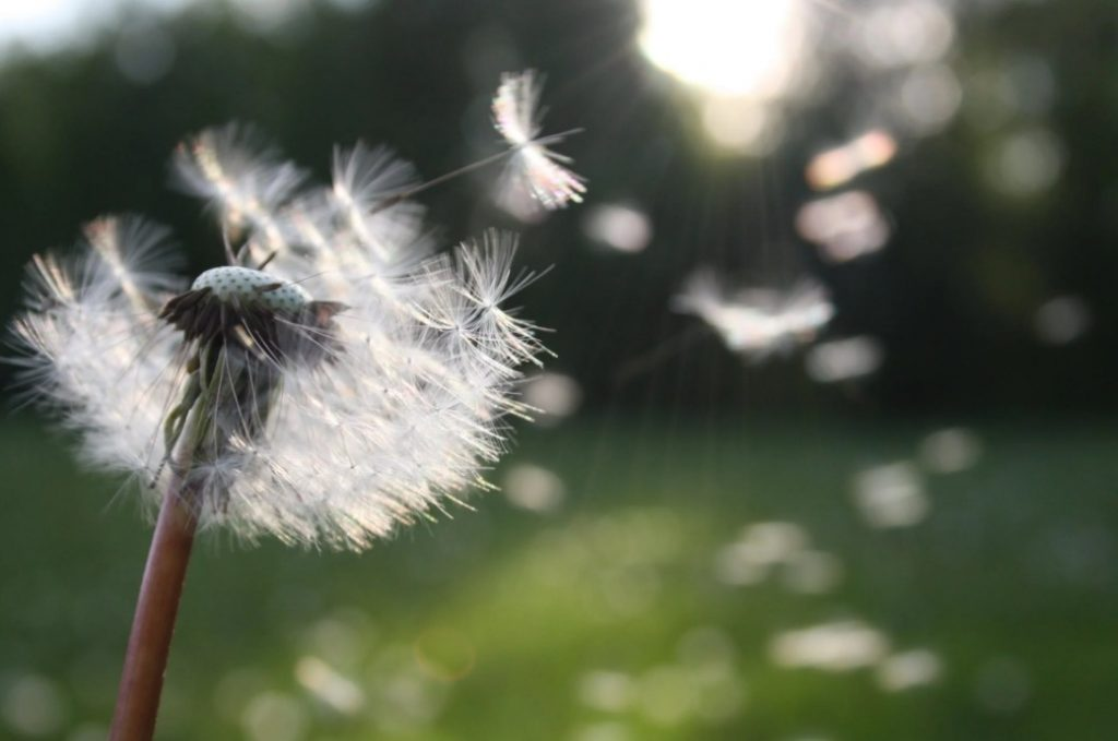 Are our allergies getting worse?