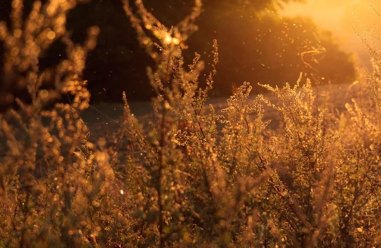 allergy myths